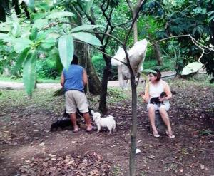 Pengunjung dengan 4 Ekor Anjingnya