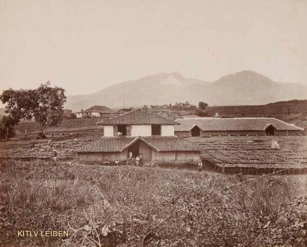Perkebunan pertama di dekat Bandung (KITLV)