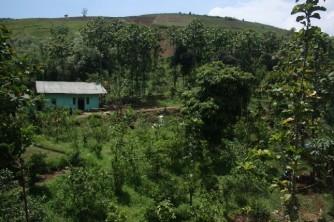Gunung Mandalawangi 2