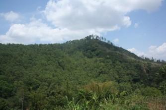 Gunung Mandalawangi 3