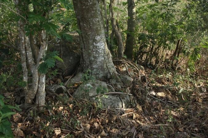 Gunung Mandalawangi 6