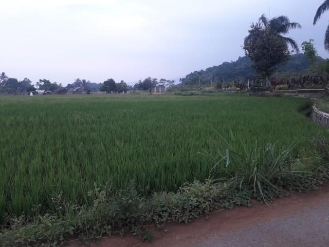 Gombong 3